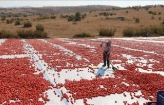 Batı Akdeniz'den domates ihracatı yüzde 50...