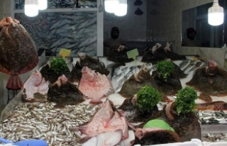 Karadeniz'de kalkan balığı bereketi