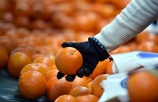 Portakalın fiyatı arttı, yeşil soğan ve salatalık...