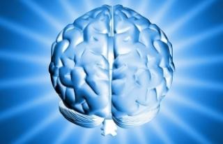 Tek bir hatıra için beynin uzak bölgelerini harekete...