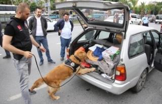İstanbul'da 'Kurt Kapanı-6' operasyonu...