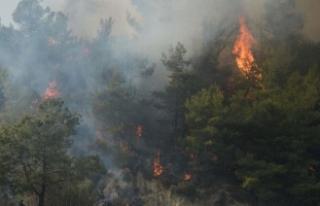 Çanakkale'deki orman yangını sürüyor