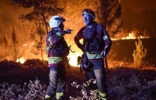 Portekiz'deki orman yangınında ölü sayısı...