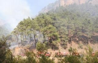Antalya'da alev alan otobüsteki yangın ormana...