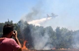 Antalya'da çalılık yangını ucuz atlatıldı