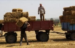 Balya işçilerinin kavurucu sıcakta zorlu mücadelesi