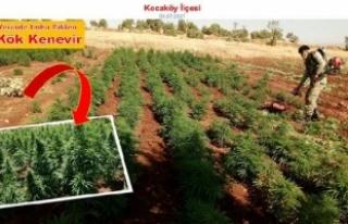 Diyarbakır'da uyuşturucu operasyonda 465 bin...