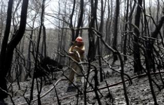 İzmir'deki orman yangınında soğutma çalışmaları...