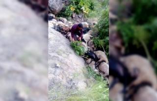 Muradiye'de kayalıklardan atlayan 80 koyun telef...