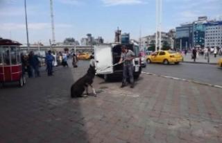 Taksim Meydanı'nda gündem bu köpek