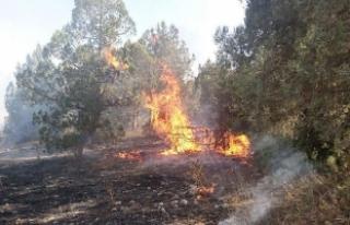 Balıkesir'de ev yangını ormana sıçradı