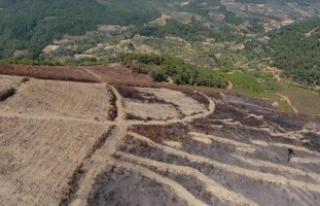 Bayındır'da yanan orman alanı yeşillendirilecek