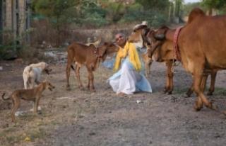 Hintli Adam, Sığır Sürüsüyle Yaşamak İçin...