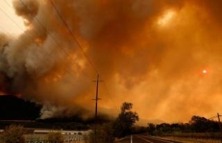 Kaliforniya'daki orman yangınlarında ölü...