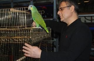 Bu papağanın fiyatı 7 bin lira!