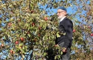 'Misket elması'nın kaybolmaması için...