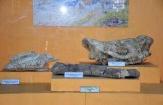 Arkeoloji Müzesi, 9 milyon yıl öncesine ışık...