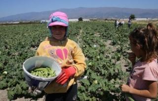 Başbakanlıktan 'çocuk işçiliği ile mücadele'...