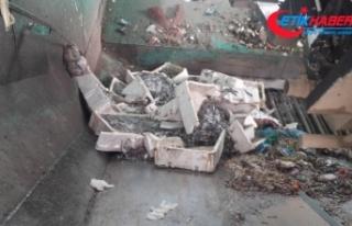 400 kilo bozuk balık ele geçirildi