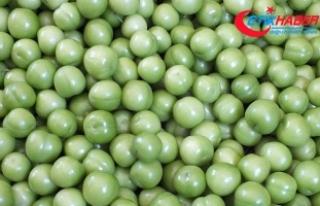İlk hasadı yapılan eriğin kilogramı 150 liradan...