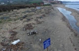 Sinop'ta yelkovan kuşları ölü bulundu