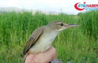 Türkiye'nin en yeni kuş türü Iğdır'da...