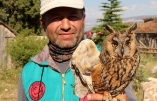 Yaralı kulaklı orman baykuşuna tedavi