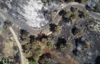 Antalya'daki orman yangınında kül olan 60...