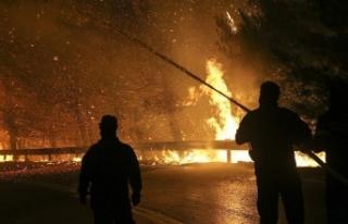 Almanya'da orman yangını