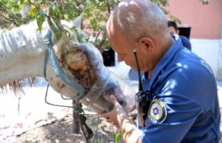 Gözü oyulduğu öne sürülen at, tedaviye alındı