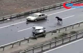 Kurbanlık boğa Trabzon'da kazaya neden oldu: 5...