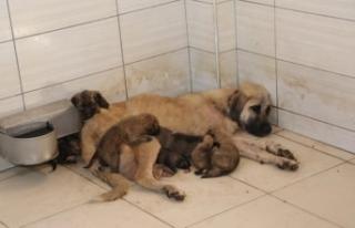 Sokağa terk edilen 4 yavru köpeğe başka bir köpek...
