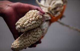 Tarım ilaçları üreticisi Monsanto'ya 289...