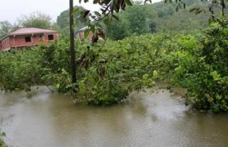 Tarım ve Orman Bakanı Pakdemirli: Afetten etkilenen...