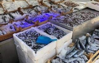 Karadeniz'de palamut bolluğu; fiyatı 5 liraya...