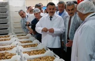 Tarım ve Orman Bakanı Bekir Pakdemirli incir işleme...