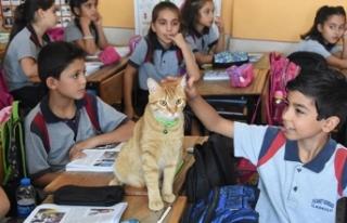 Yaz tatilinde özlenen 'Tombi', sınıfa...