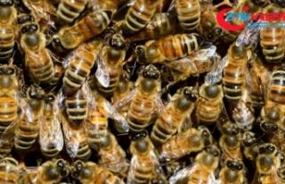 Kilis'te arıların saldırısına uğrayan kadın...