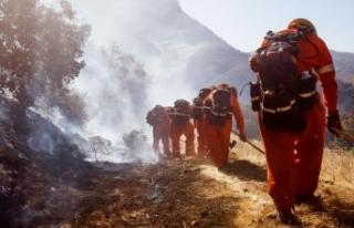 California'daki yangının bilançosu artmaya...