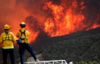 California'daki yangınlarda ölü sayısı 74'e...