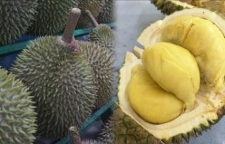 Endonezya'da duryan meyvesinin kokusu nedeniyle...