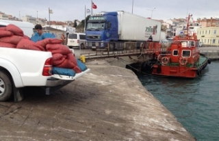 Gelibolu'da 2,5 ton kum midyesi ve 400 kilo deniz...