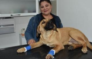 Yavru köpeği, bacaklarından vurdular
