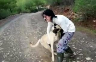 Anestezi uygulanan sokak köpekleri ormana atıldı