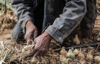 İsrail'de çalışan Taylandlı işçiler ölümle...