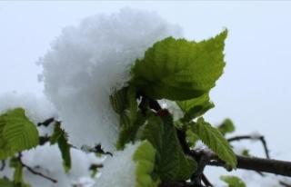 Kar yağışı fındık üreticileri ve ihracatçılarını...
