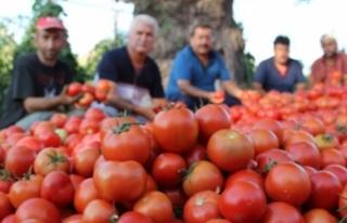 Rusya Türkiye'den domates ithalatını 2 kat...