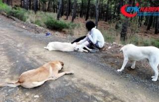 Sakinleştirici ilaç verilen 11 köpeğin sokağa...