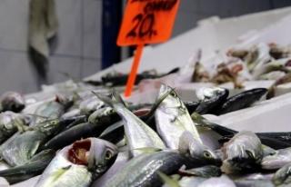 Tezgahlardaki balık çeşitliliği yüz güldürüyor