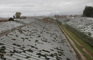 Antalya'da bin dönümün üzerinde serada hasar...